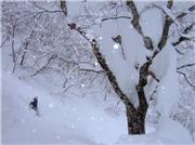 Pow practise., uploaded by Ewok 2  [Hachi Kita Kogen, Kami Town, Hyogo]