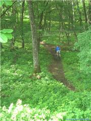 mtb in Hakuba, uploaded by Fattwins