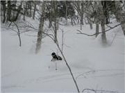 Royce McKean meets Furano Powder., uploaded by FuranoNow  [Furano, Furano City, Hokkaido]