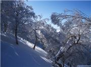 World class terrain!, uploaded by Lee-nus  [Nozawa Onsen, Nozawa Onsen Village, Nagano]