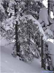 Trees 2, uploaded by Mick Rich  [Kiroro Snow World, Akaigawa Village, Hokkaido]