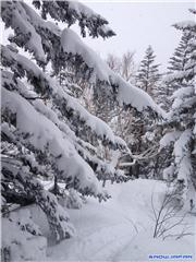 Trees 3, uploaded by Mick Rich  [Kiroro Snow World, Akaigawa Village, Hokkaido]