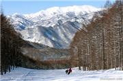 looking down one of the courses on a sunny day, uploaded by Minakami photos  [Minakami Kogen Ski Resort, Minakami Town, Gunma]