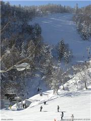 looking up at the panorama course., uploaded by Pusher  [Furano, Furano City, Hokkaido]