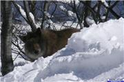 I think this guy was as surprised as I was., uploaded by daver  [Hakuba 47 Winter Sports Park, Hakuba Village, Nagano]