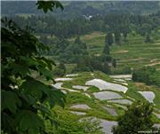 Matsudai Tanada rice fields, late May, uploaded by muikabochi