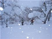 Niseko Trees, uploaded by puretele  [Niseko Mountain Resort Grand Hirafu, Kutchan Town, Hokkaido]